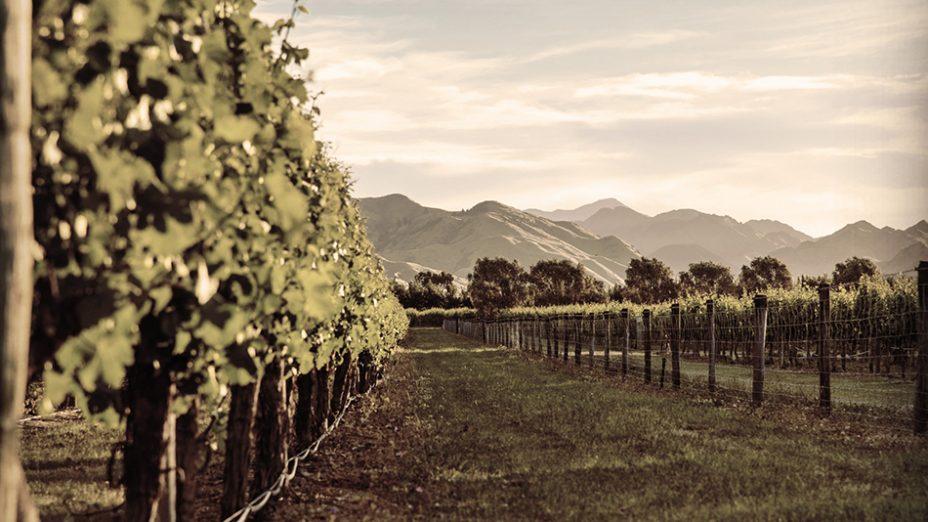 Santa Lucia Highlands - Vineyard shot