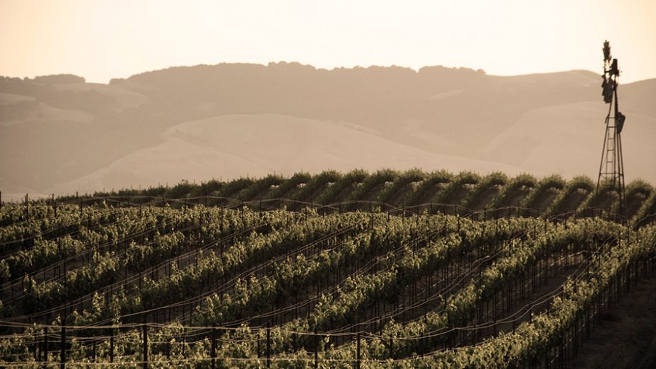 Santa Lucia Highlands - rows of grape vines near windmill